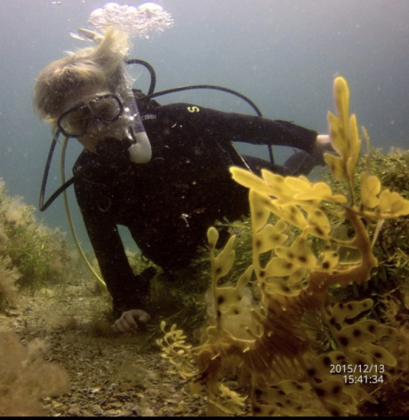 My first dive, encountering a leafy sea dragon in a seagrass meadow